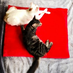 copy of Tapis doux Les...
